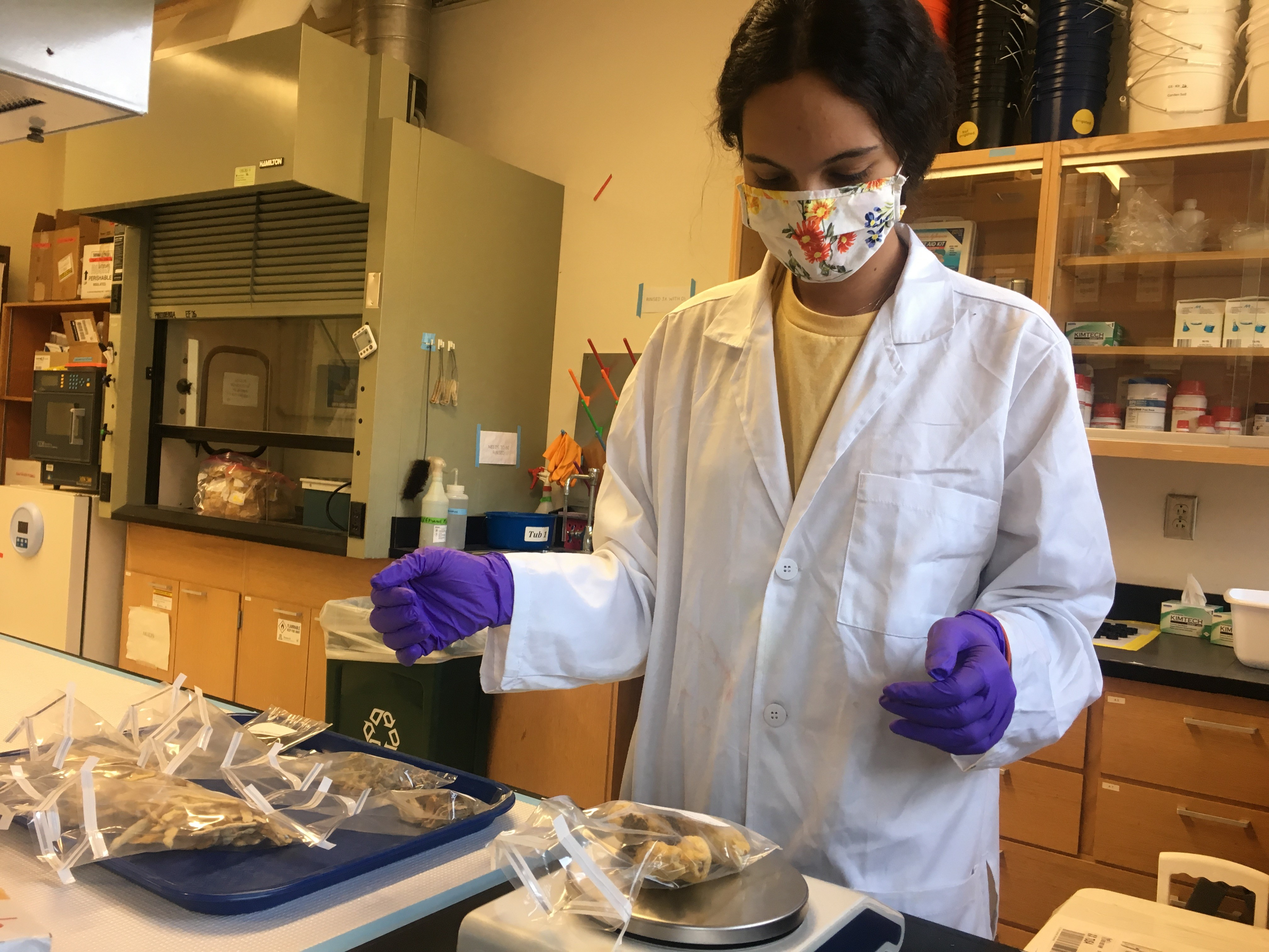 Environmental student in lab