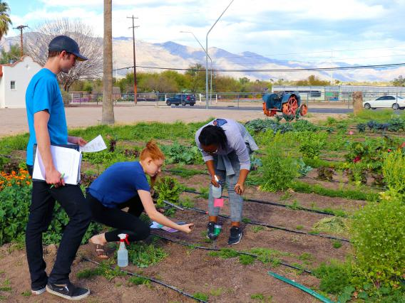 Students can minor in environmental science