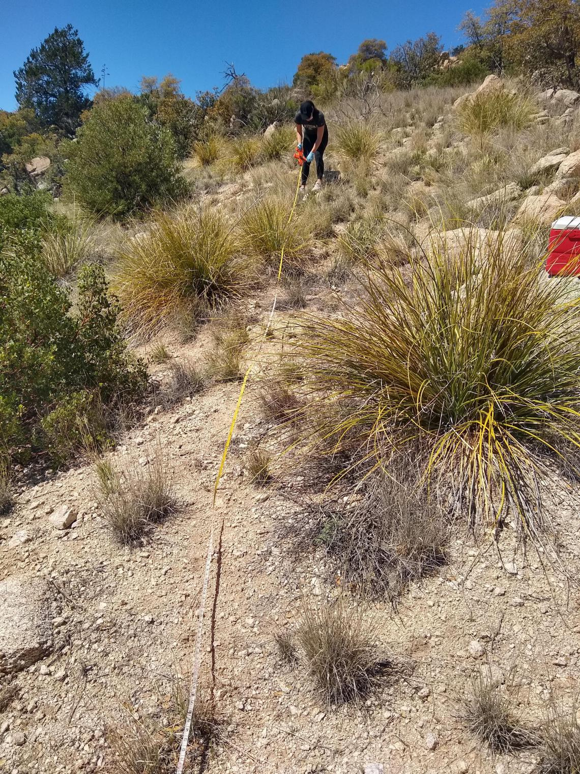 Studying microbial communities in the desert
