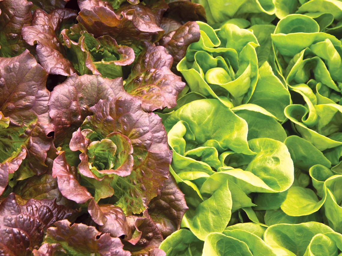 Study fresh produce safety