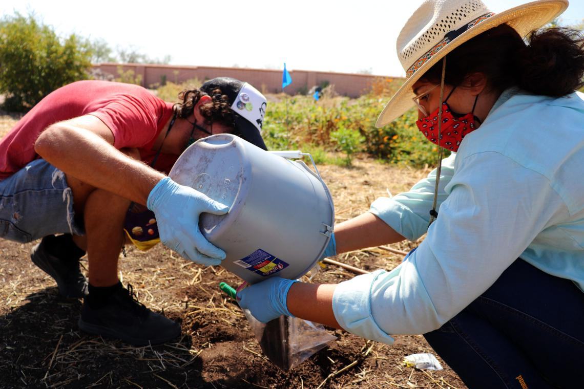 Collecting soil samples to study microbes