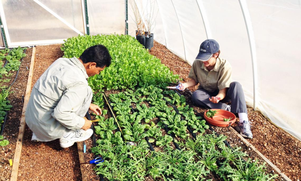 Students studying horticulture practices