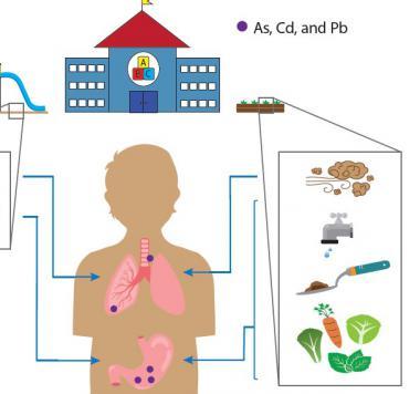 Exposure assessment to looking at preschool garden contaminants