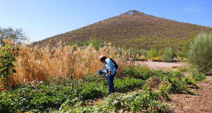 Sampling soil in Mission Garden